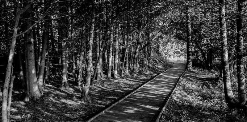 步行的一美好的天在阳光下 免版税库存照片