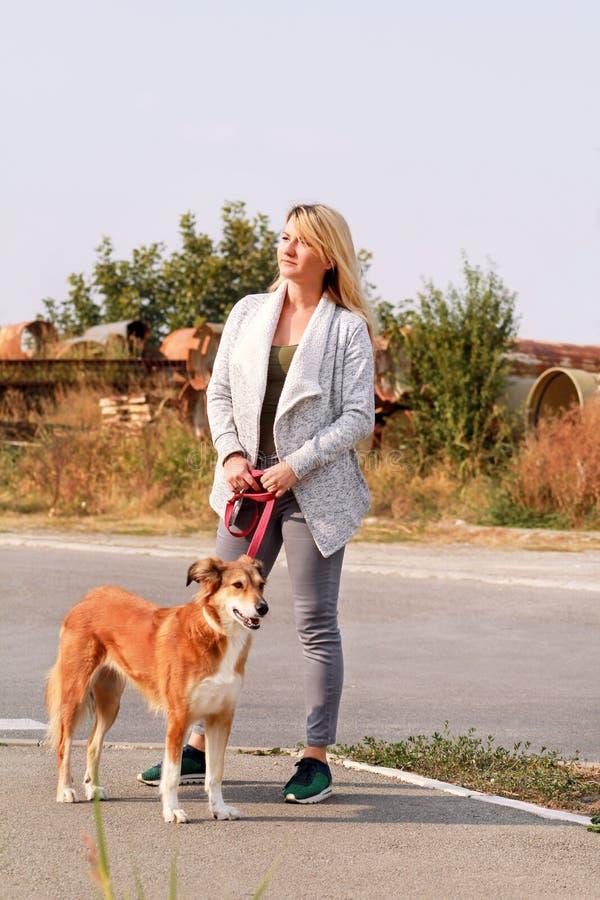 步行的妇女与他的在皮带的设德蓝群岛牧羊犬狗 狗步行者身分,摆在照相机前面 库存图片