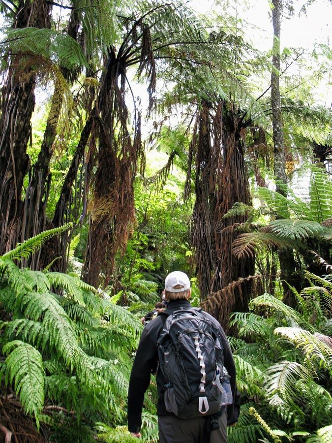 步行通过在Mokiao海岛上的灌木的徒步旅行者 库存图片