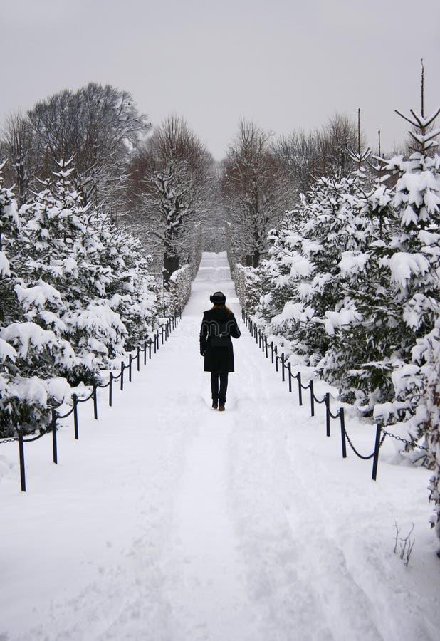 步行通过多雪的森林 免版税库存图片
