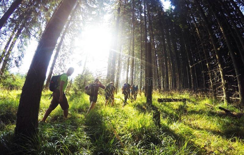 步行通过森林 库存照片