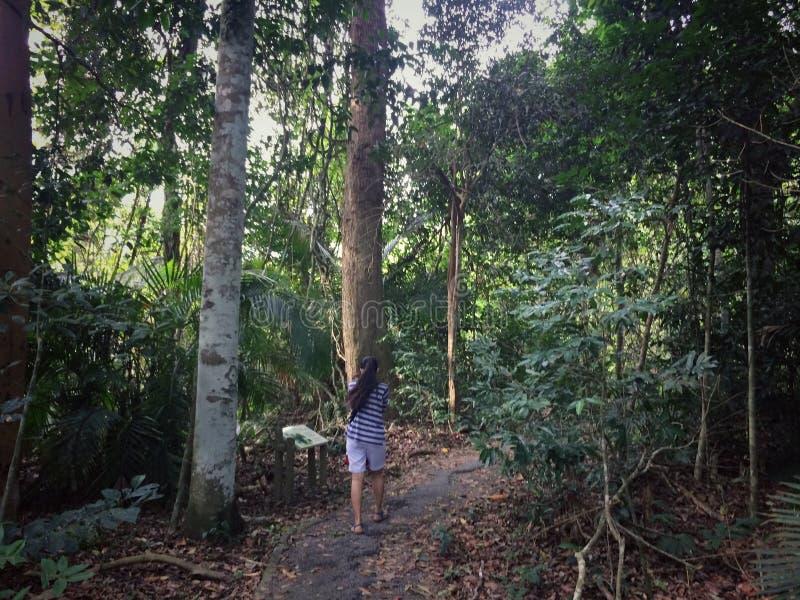 步行通过自然森林 图库摄影