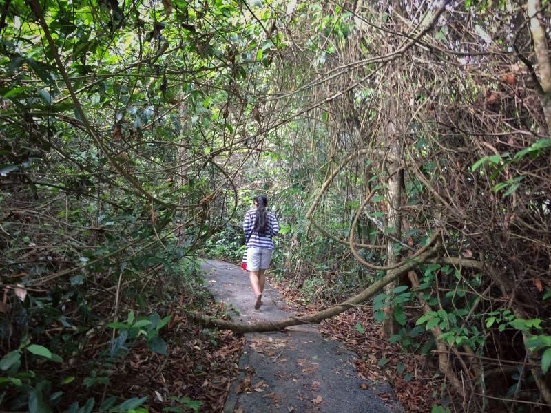 步行通过自然森林 免版税库存照片
