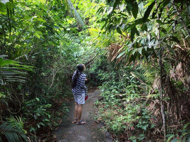 步行通过自然森林 库存照片