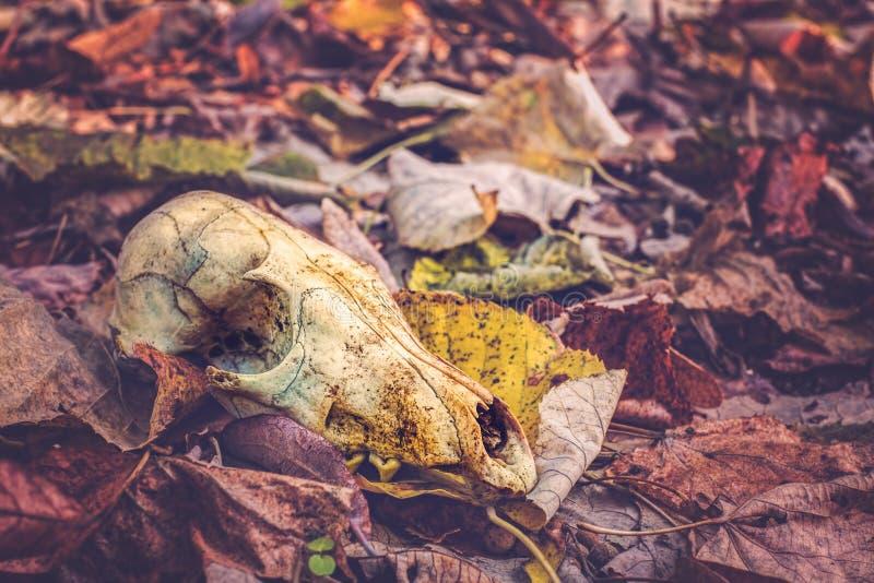 死亡在森林里 免版税库存图片