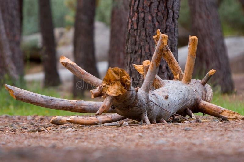 死亡结构树 库存图片