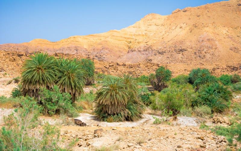 死海海岸线沙漠风景与白色盐,约旦,以色列的 免版税图库摄影