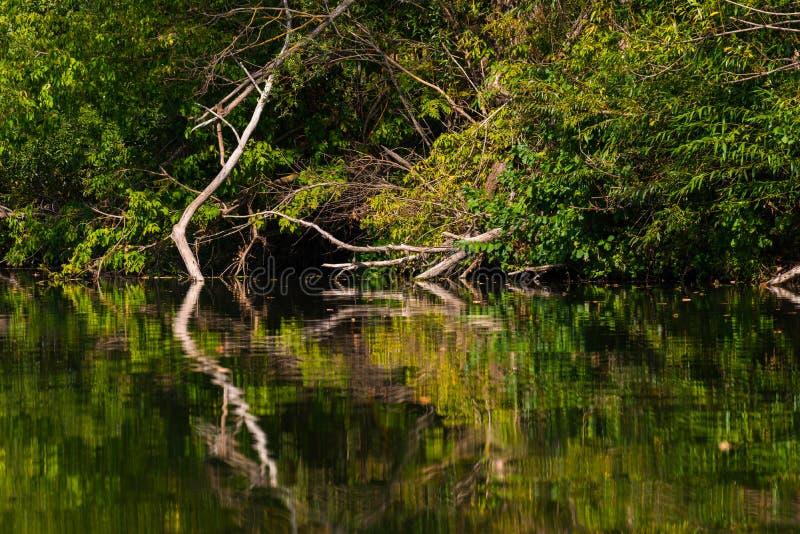 死的树和分支在水中 库存照片