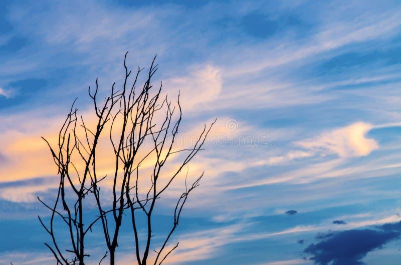 死的树和a天空天空剪影与美丽的分支和bl解痉药v天空图片