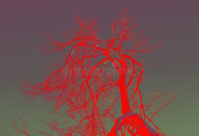 死的树枝红色摘要  免版税库存照片