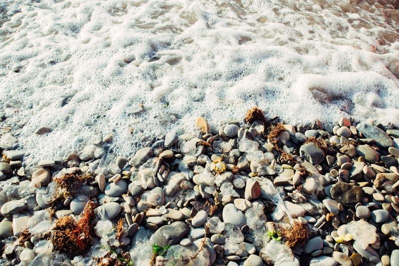 死的水母、干燥红藻和垃圾在小卵石海海滩 库存照片