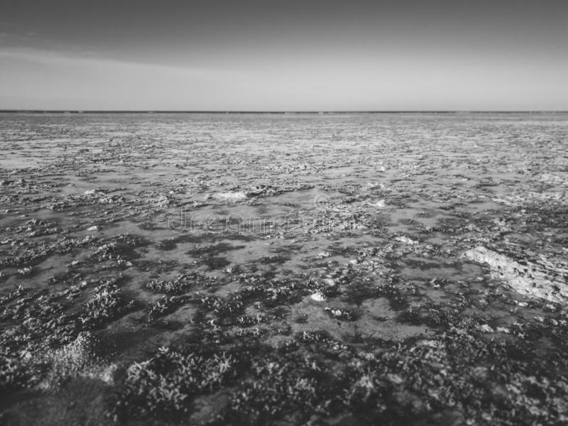 死的珊瑚礁和海杂草黑白抽象风景在海 库存图片