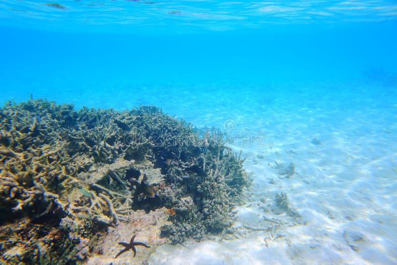死的珊瑚礁美丽的景色  绿松石水和白色沙子背景 印度洋 库存图片