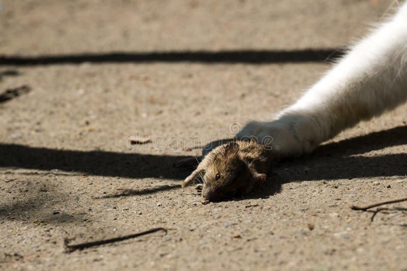死的老鼠在地面上说谎 免版税库存图片