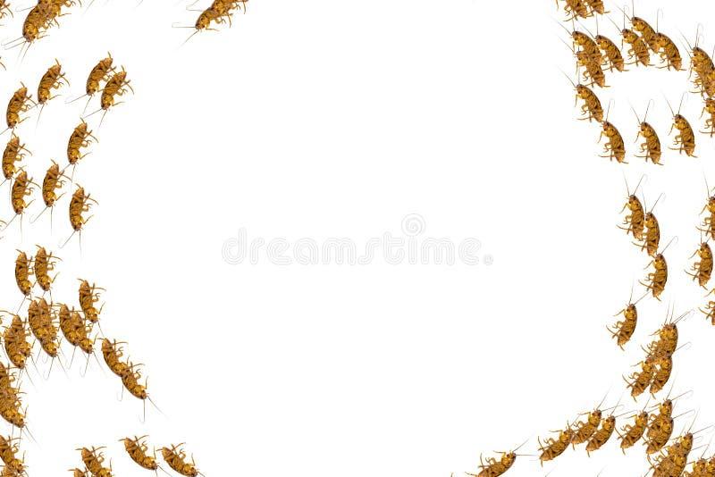 死的蟑螂拼贴画在白色背景的 免版税库存图片