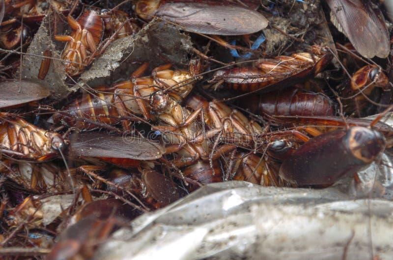 死的蟑螂筑巢图象 免版税图库摄影
