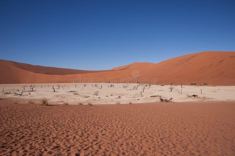 死的vlei,在sossusvlei,纳米比亚的死的谷 库存图片