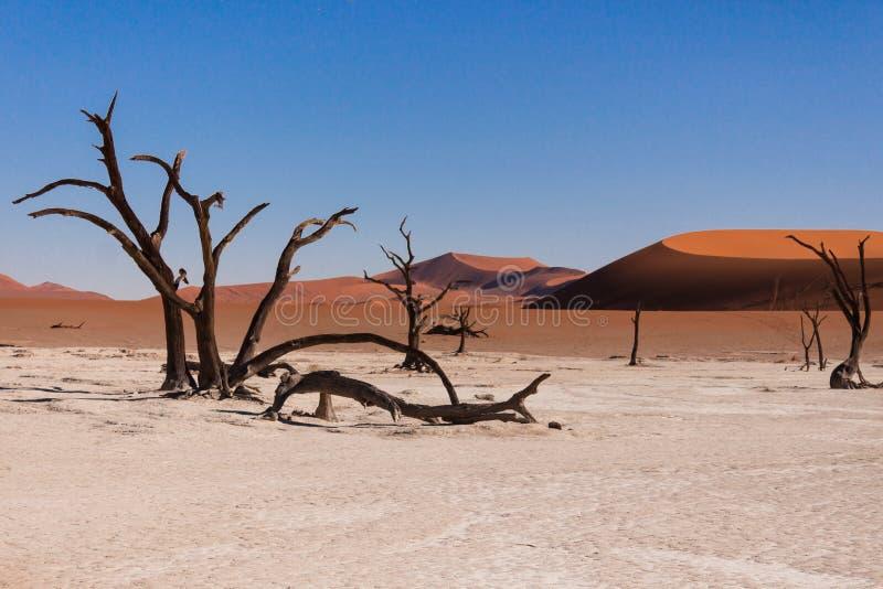 死的vlei,在sossusvlei,纳米比亚的死的谷 免版税图库摄影