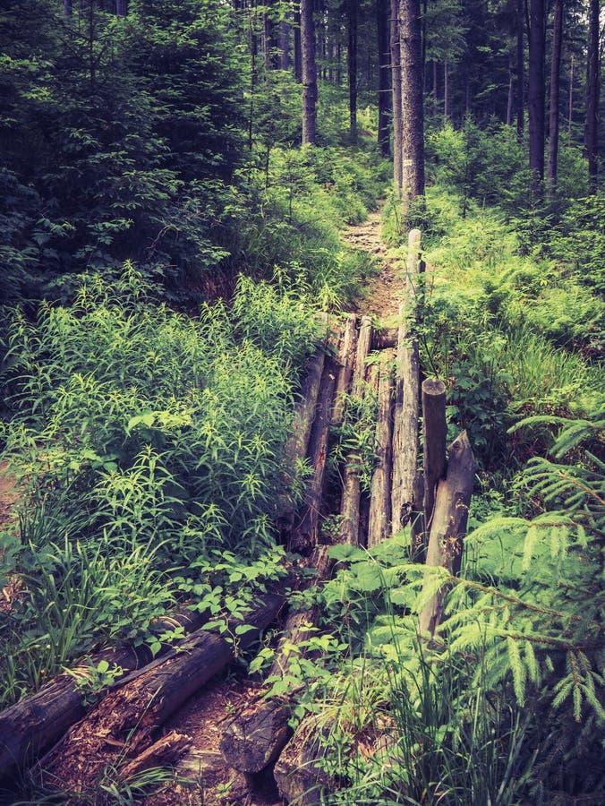 残破的人行桥在山的一个森林里 免版税库存照片