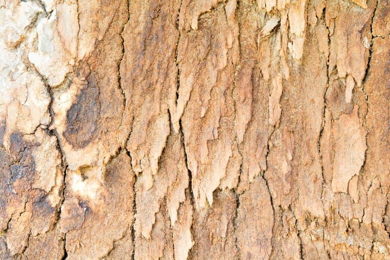残破的木表面,老木表面的样式 免版税库存照片