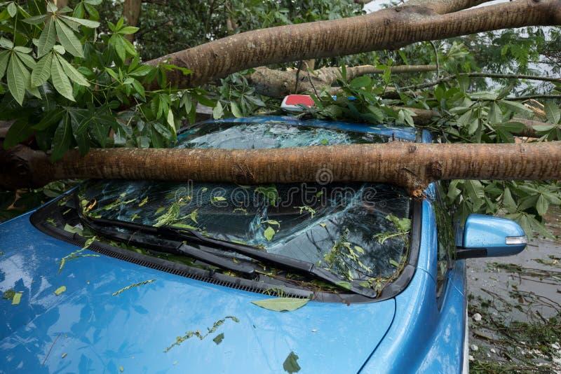 残破的树下落在停放的汽车顶部 免版税图库摄影