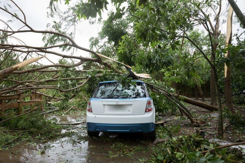 残破的树下落在停放的汽车顶部 免版税库存图片