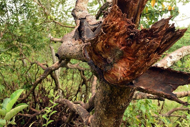 残破的树枝 纹理,背景 免版税库存图片