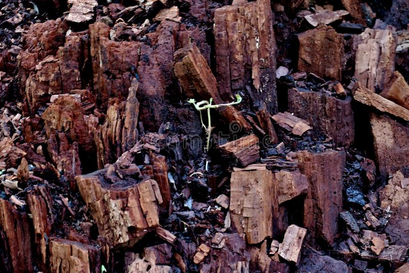 残破的树桩在森林里到许多不同的片断里 免版税库存照片