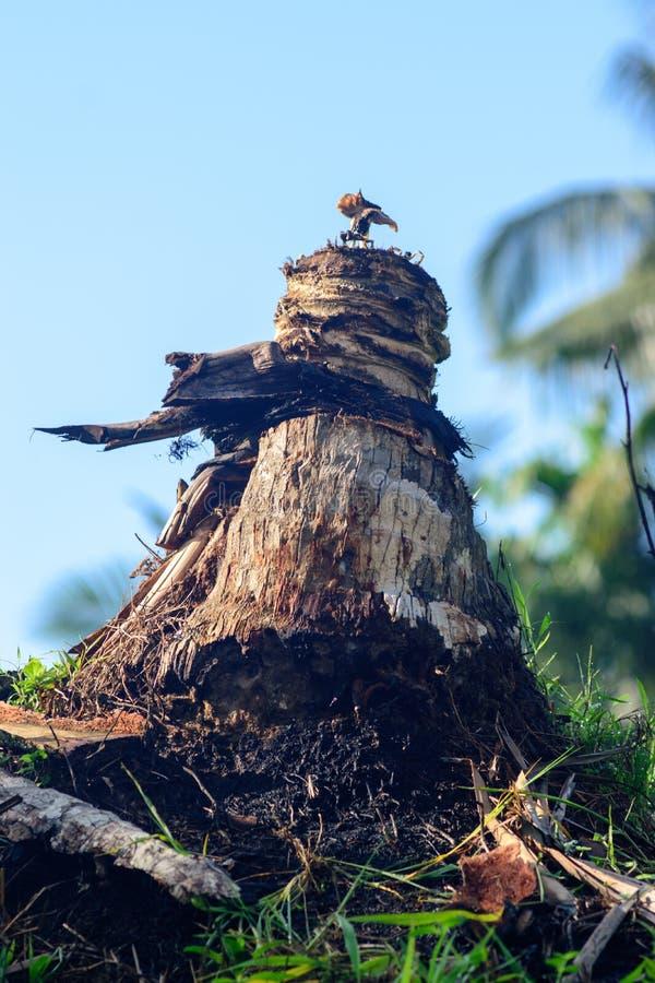 残破的椰子树 免版税库存图片