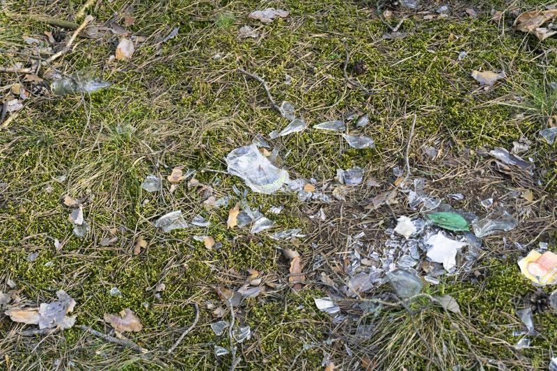 残破的玻璃碎片在青苔地面的在森林里 库存照片