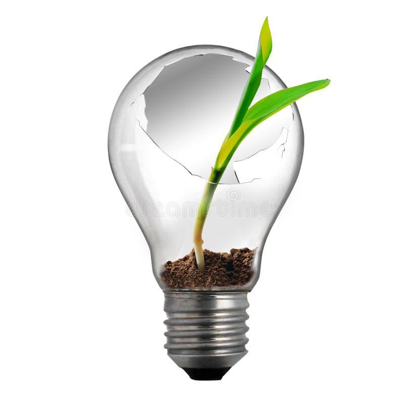 残破的电灯泡光 向量例证