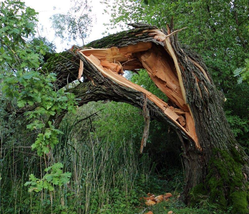 残破的结构树 图库摄影