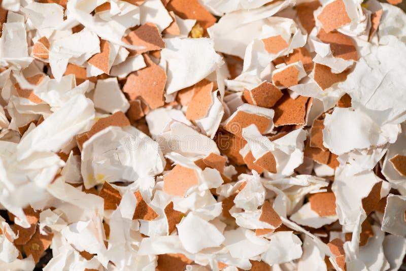 残破的蛋壳背景 库存图片