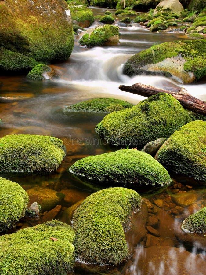 残破的树干被阻拦在明亮的被弄脏的波浪上的小河银行 大生苔冰砾在山河中清楚的水  免版税库存图片