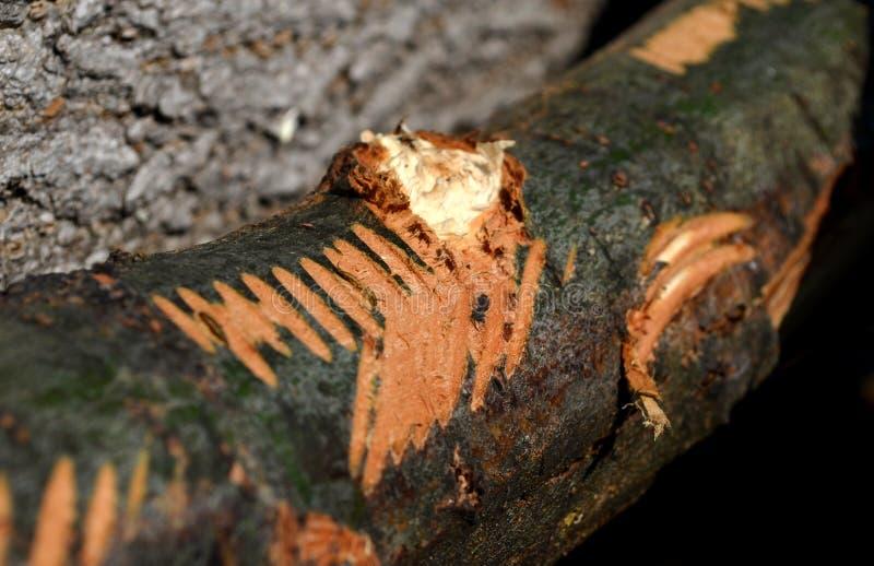 残破的树皮纹理 库存图片