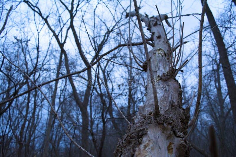 Download 残破的结构树 库存图片. 图片 包括有 木料, 生活, 设计, 谷物, browne, 圈子, 同心, 会议室 - 72359459