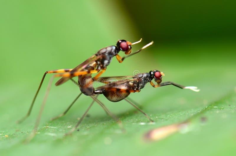 养殖有软的背景的昆虫 图库摄影
