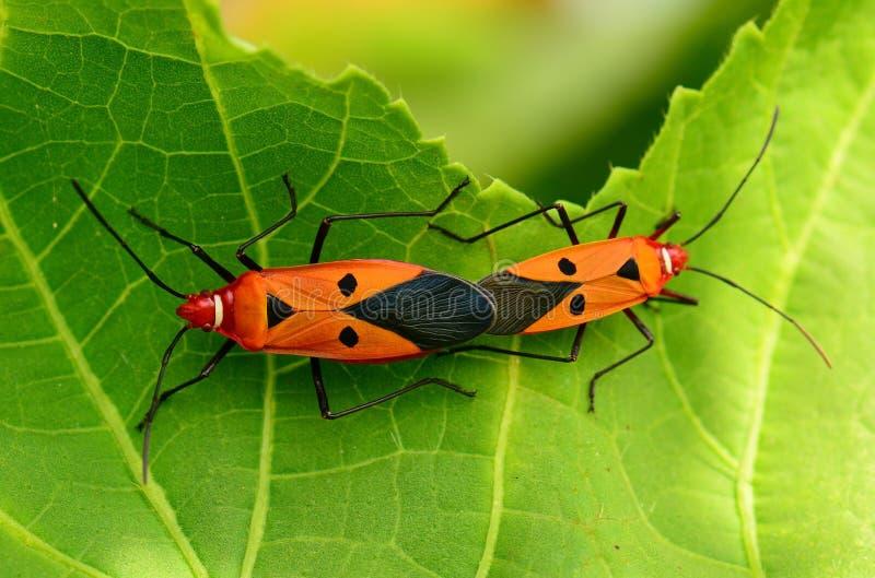 养殖有软的背景的昆虫 库存照片