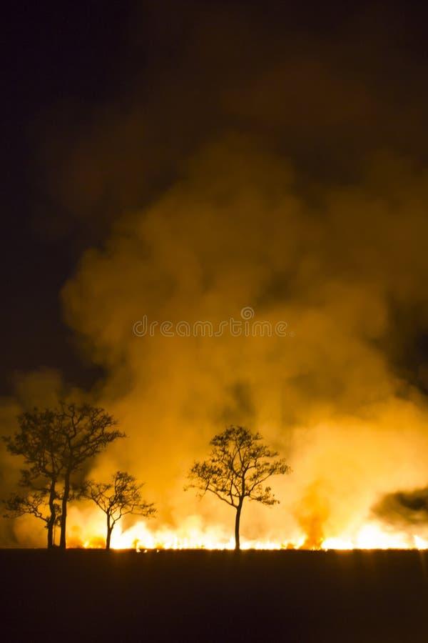 毁坏野火灼烧的森林生态系 免版税库存图片