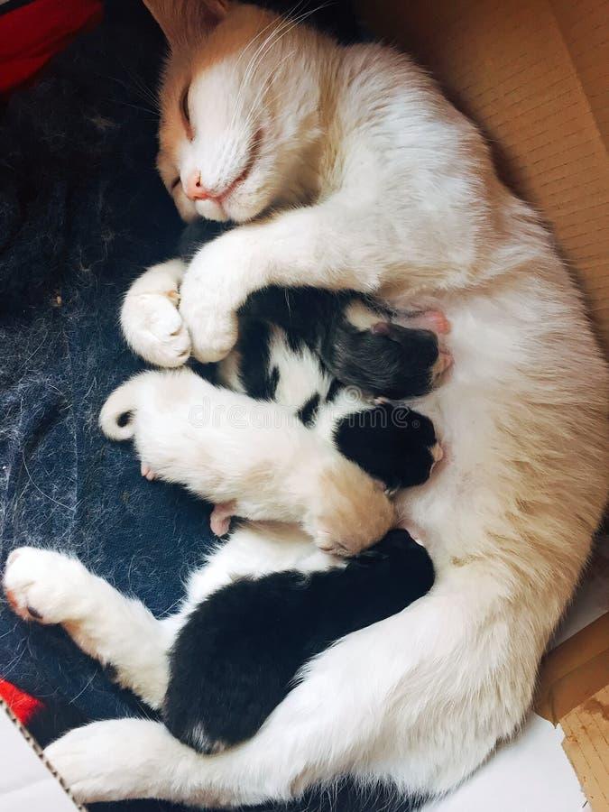 母亲和儿子猫 免版税库存图片