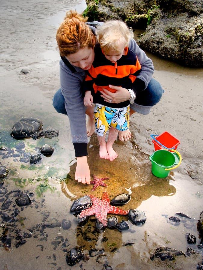 母亲和儿童在浪潮水池俄勒冈的手表海星 库存图片