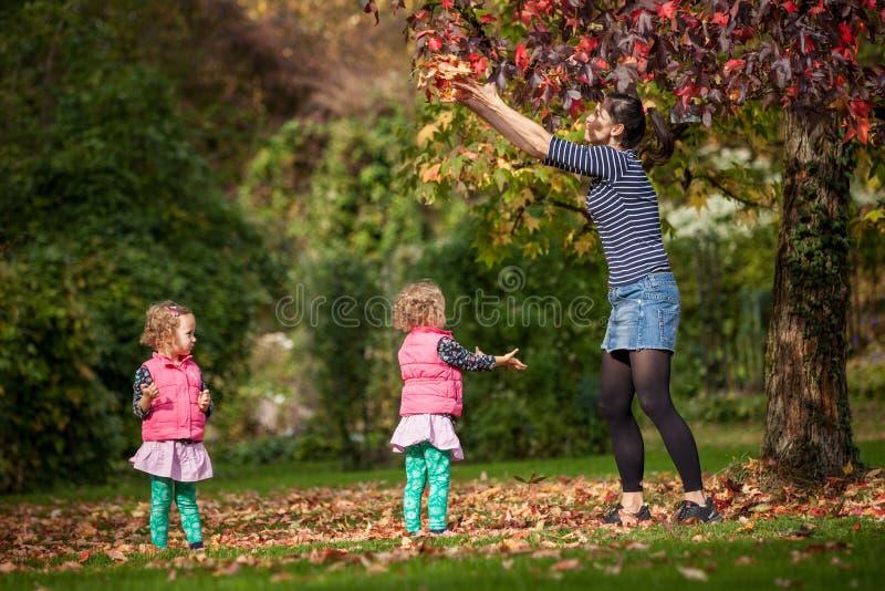 母亲和同卵双生获得乐趣在与秋叶在公园,白肤金发的逗人喜爱的卷曲女孩,幸福家庭的树下 免版税库存图片
