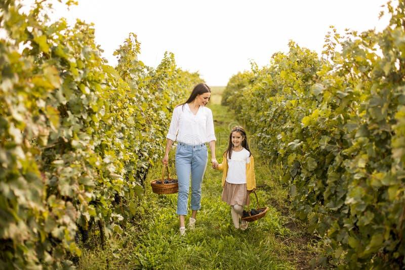 年轻母亲和她逗人喜爱的女孩获得乐趣在秋天葡萄园 免版税库存图片