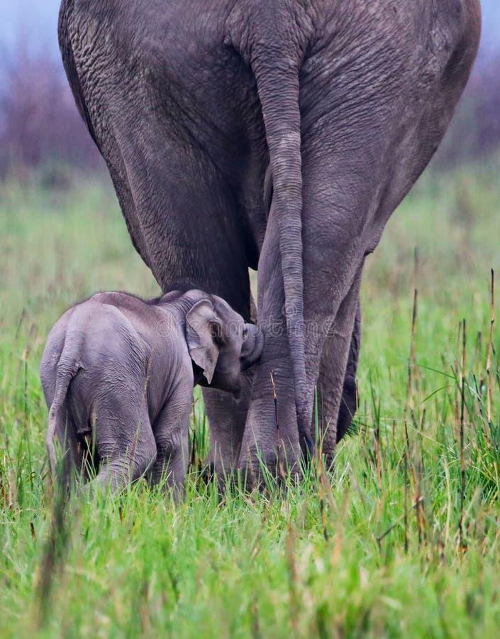 母亲和孩子之间的关系 库存图片