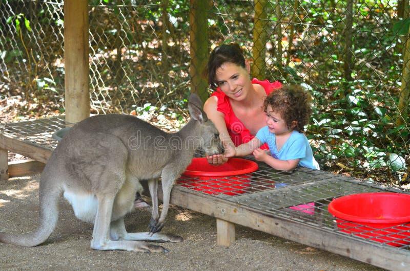 母亲和孩子在昆士兰澳大利亚喂养一只灰色袋鼠 免版税库存图片