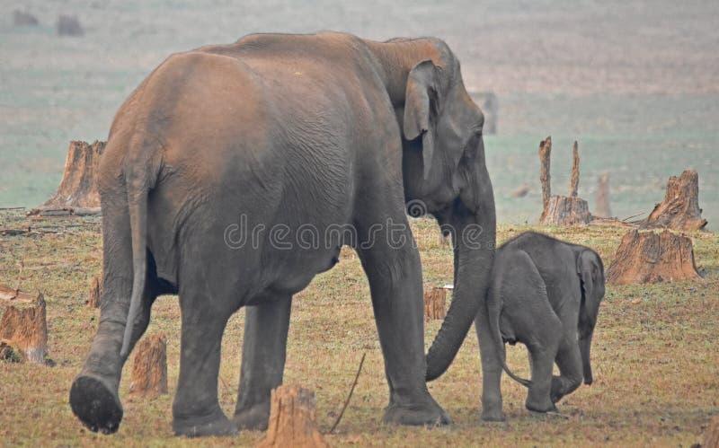母亲和婴孩大象 免版税图库摄影