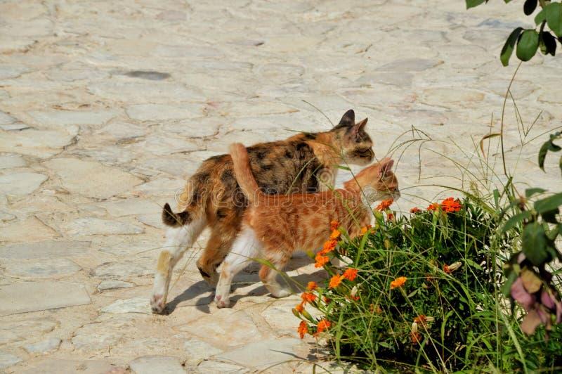 母亲猫和她小的红色拷贝 免版税库存照片