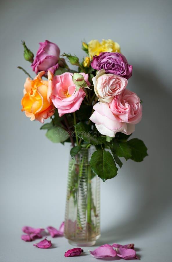 从母亲的庭院的玫瑰 免版税库存图片