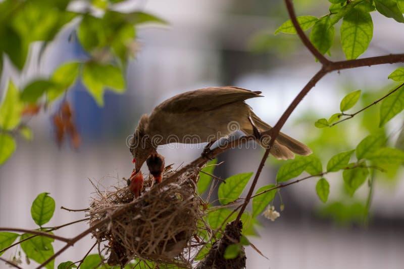 download 母亲鸟和小鸡在分支 库存图片.