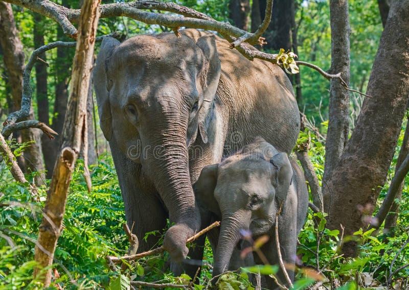 母亲&婴孩大象 库存图片